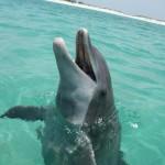 Dolphin 13