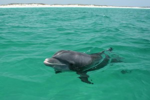 Dolphin 14