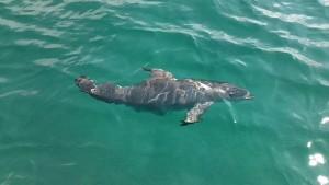 Dolphin 9