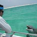 Last Local Guide Service, Panama City Beach- Dolphin