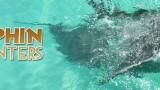 Main-Dolphin