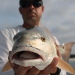 Redfish Gallery 6