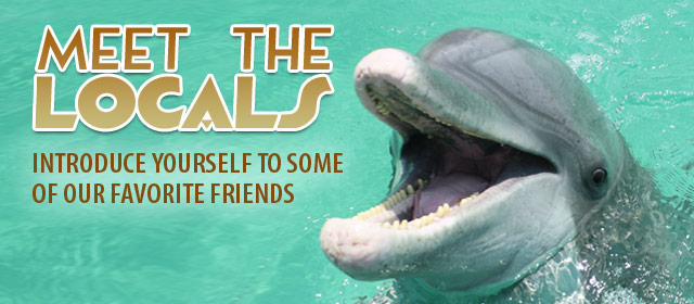 dolphin-slider