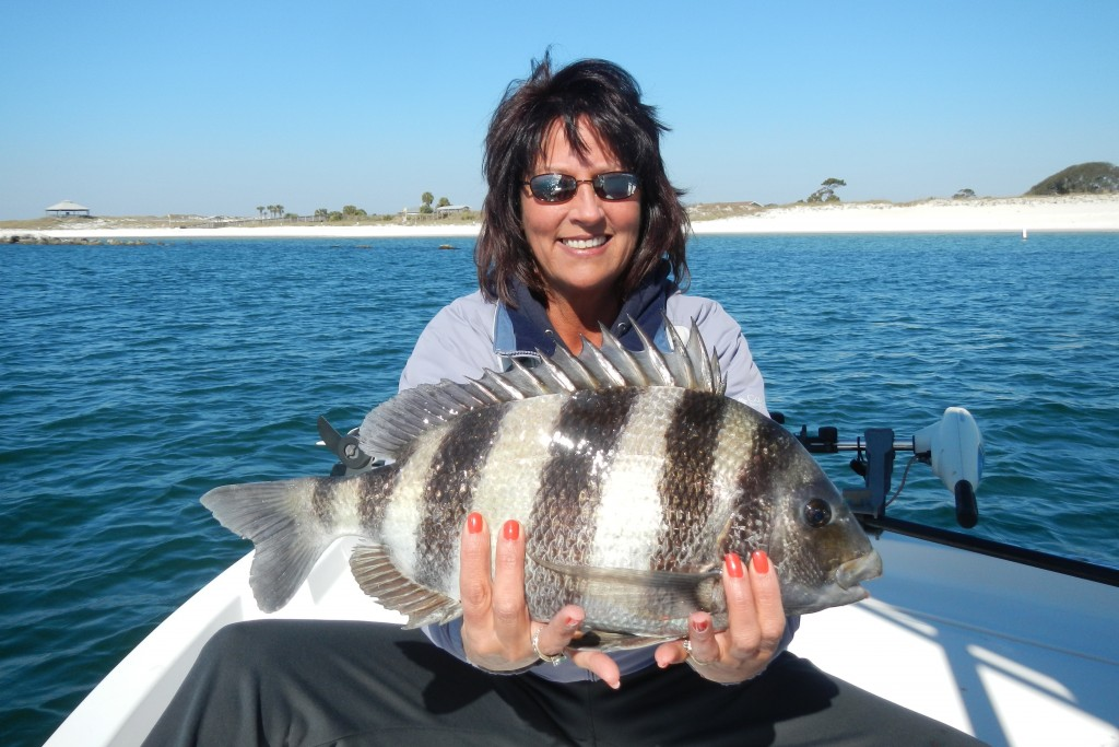 Panama City Beach, Last Local Guide Service- sheepshead ...Saltwater Sheepshead Fish Good To Eat