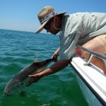 Anderson Crevalle 2