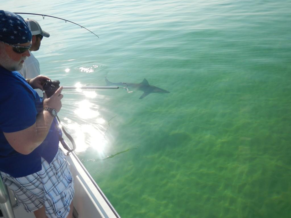 Shark fishing heats up on panama city beach last local for Surf fishing panama city beach