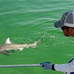 Last Local Guide Service- Blacktip Shark Fishing
