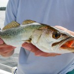 Last Local Guide Service, Speckled Trout- Kelley7