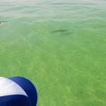 Scottie Childs Shark