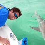 Last Local Guide Service- Blacktip Shark (Phillips4)
